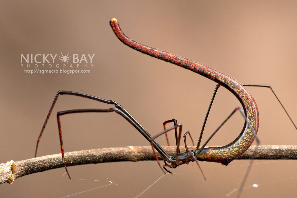Nicky Bay - Amazing Insects Photograph